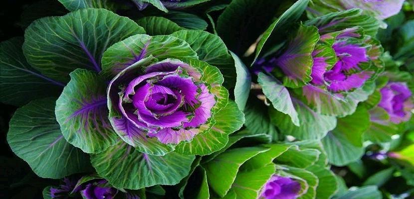 أزهار ملونة غريبة