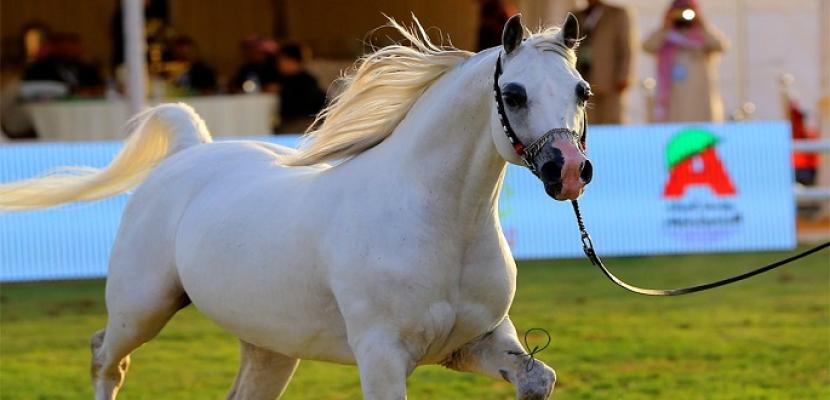 الخيول تحفظ عن ظهر قلب انفعالاتك وأحاسيسك