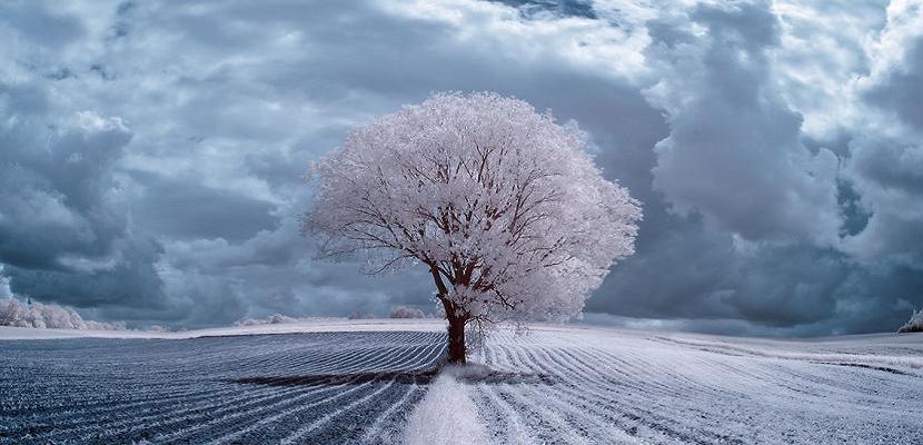شاهد أروع الصور للأشجار في فصل الشتاء