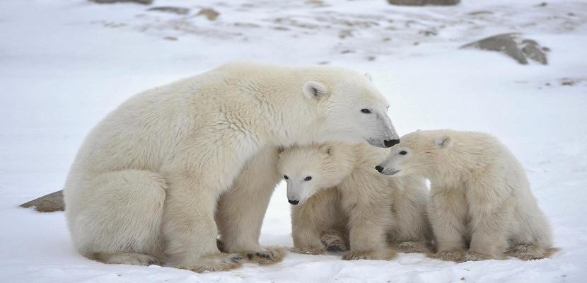 الأمومة عند الحيوانات