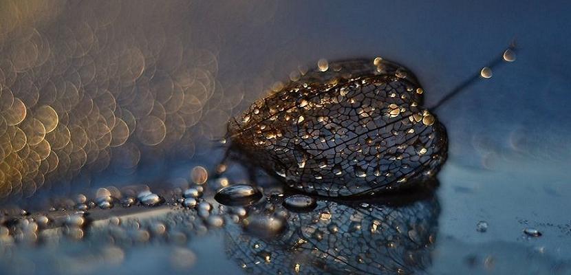 سحر جمال أوراق الشجر مع قطرات الندى