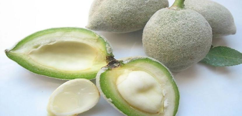اللوز الأخضر الطازج أفضل المصادر النباتية للكالسيوم