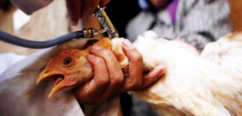 """وزارة الزراعة تعلن اكتشاف نوع جديد لمرض إنفلونزا الطيور """"h5n2"""""""
