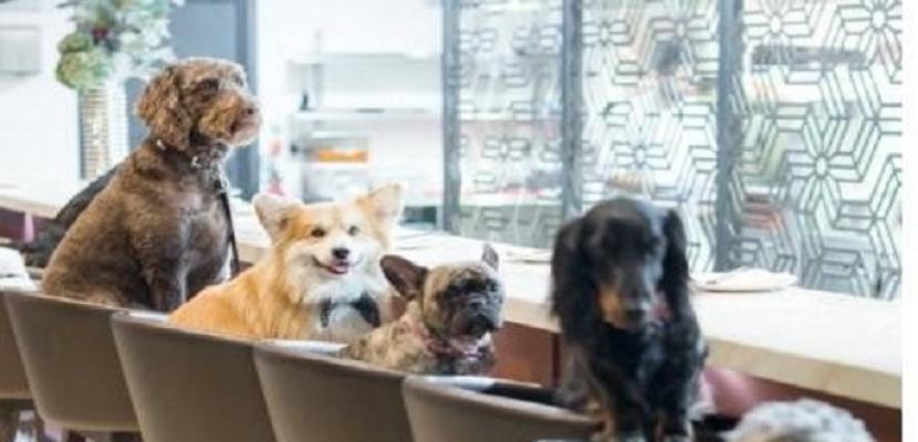 مطعم إيطالي يسمح بدخول الكلاب مع أصحابها بشرط دفع رسوم إضافية