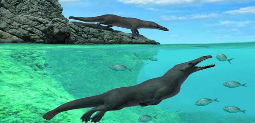 اكتشاف حفرية حوت برمائي بأربعة أرجل عاش قبل 43 مليون سنة