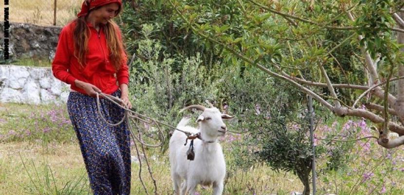 عارضة أزياء تركية تترك منصة الموضة لرعى الأغنام