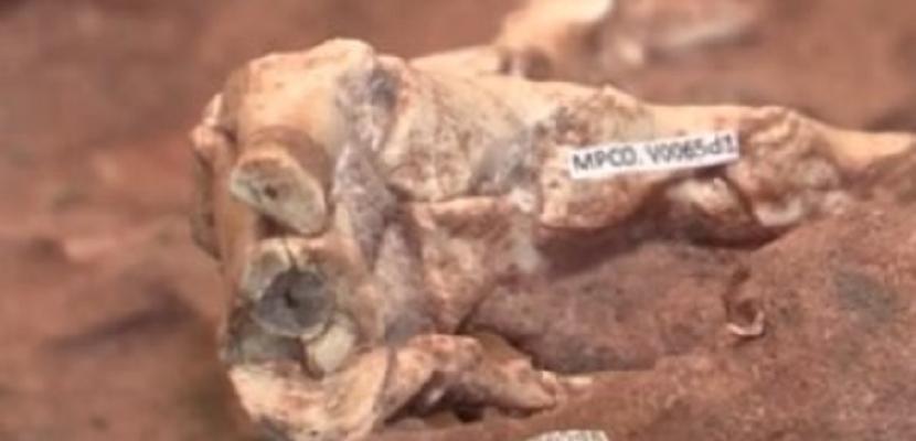 اكتشاف حفريات لأقدام ديناصورات تعود لمائة مليون سنة شرقي الصين