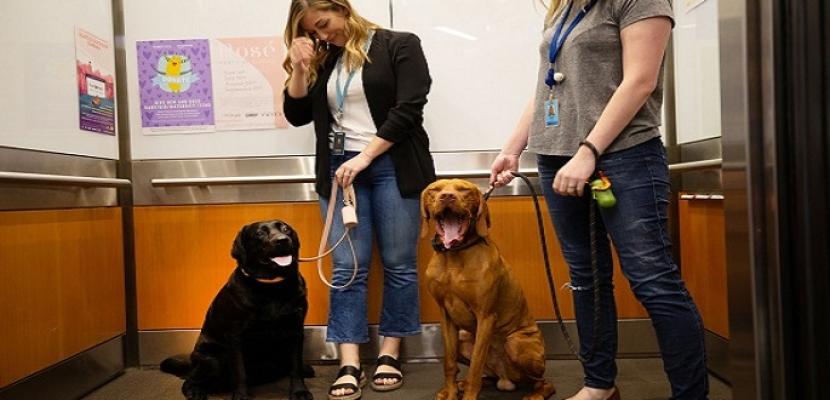 كلاب تعمل مع أصحابها لدى أمازون