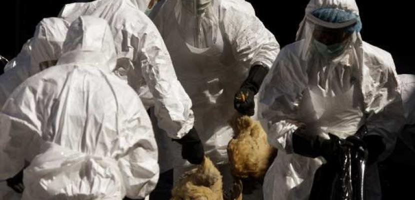 تسجيل أول وفاة بانفلونزا الطيور في أمريكا الشمالية