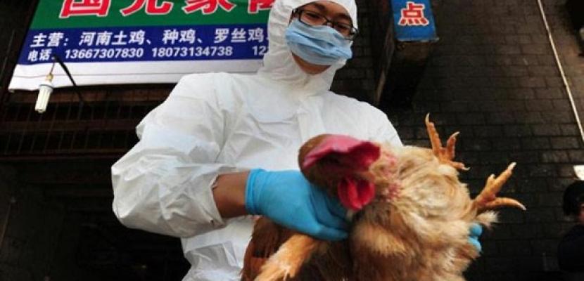 كوريا الجنوبية تفرض حصارًا على مزارع 3 أقاليم لاحتواء تفشي إنفلونزا الطيور