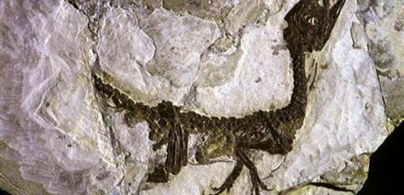 علماء: حفريات اكتشفت في الصين تمثل اطلالة على الماضي السحيق