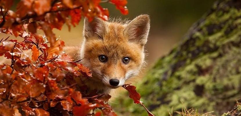 أجمل صور الحيوانات .. تودع الخريف