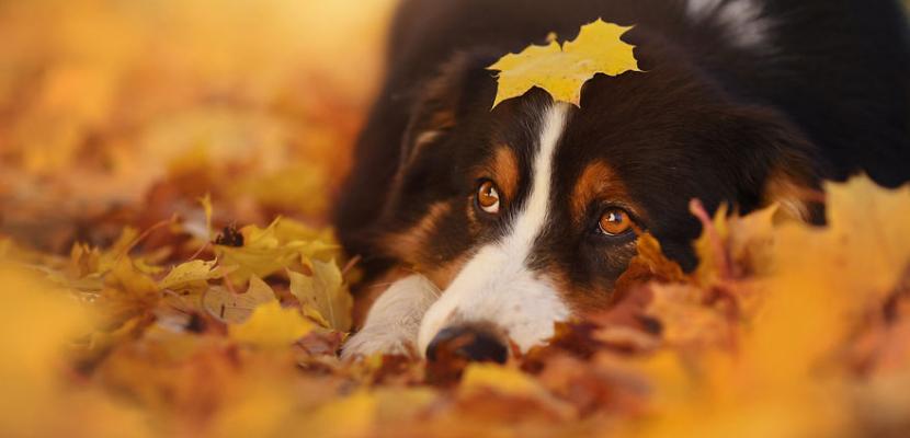 دراسة: الكلاب لا تفضل رؤية وجوه البشر