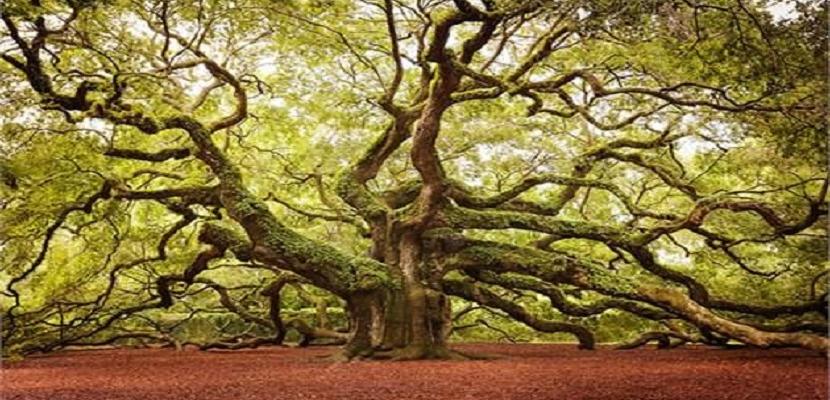 أجمل الأشجار بالعالم
