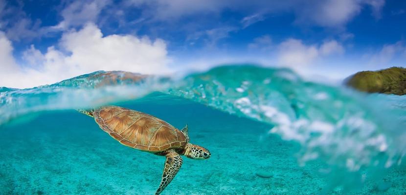 الطبيعة الساحرة .. تحت و فوق الماء