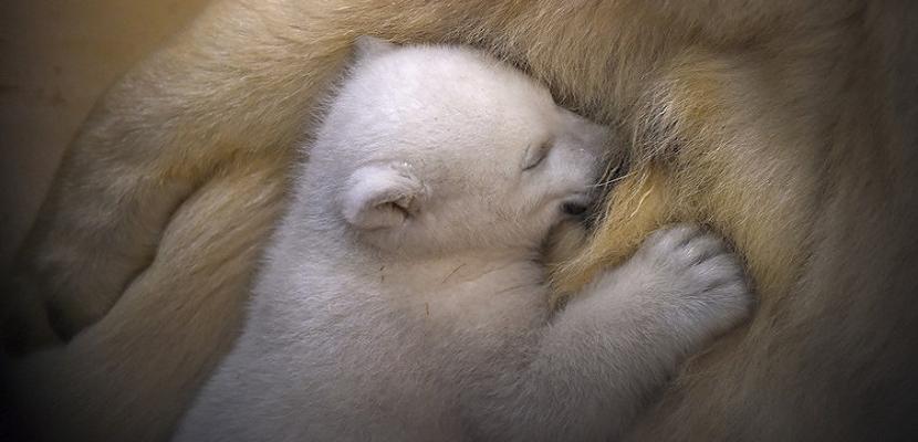 بالصور.. الأمومة في عالم الحيوان
