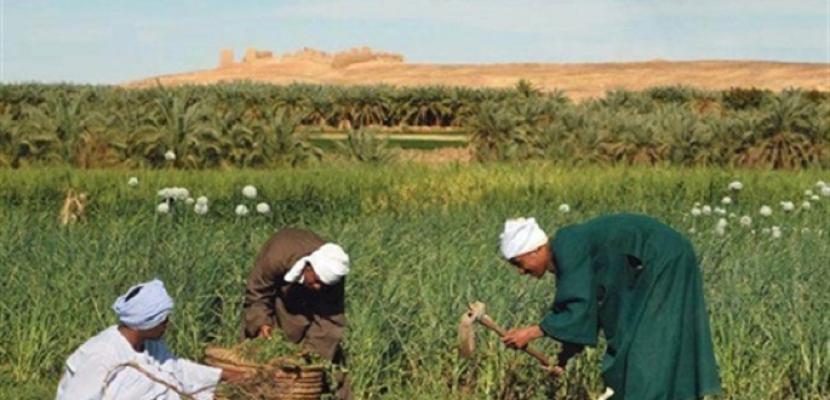 في عيد الفلاح.. كيف أكملت 30 يونيو ما بدأته ثورة الإصلاح الزراعي؟