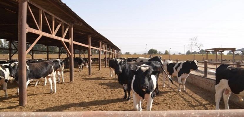 """وزارة الزراعة تبدأ صرف قروض المرحلة الثانية لمشروع """"البتلو ..."""