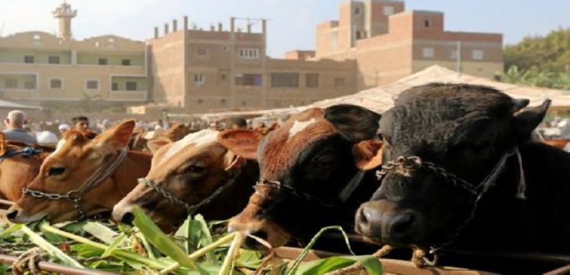 """""""الصادرات والواردات"""" تستقبل 82 ألفا و401 رأس حيوانات حية من 11 دولة"""