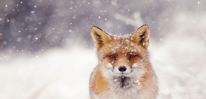 الشتاء .. في أحضان الطبيعة