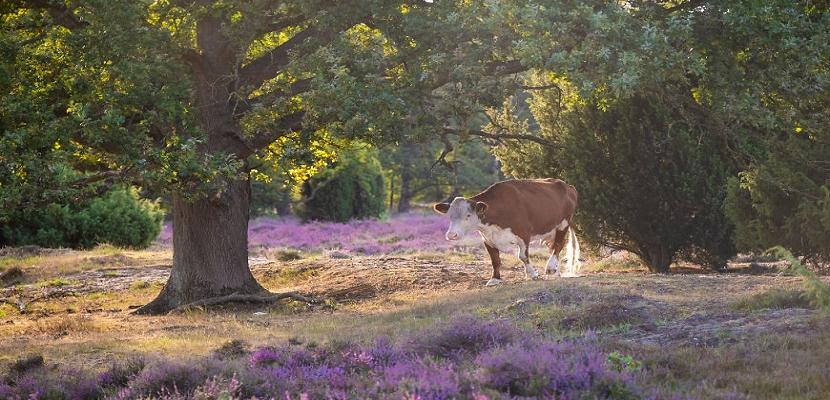 هولندا.. الطبيعة الخلابة
