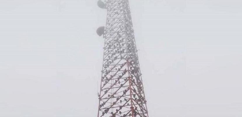 مئات النسور تحتل برج اتصالات أمريكيا.. والسلطات في حيرة