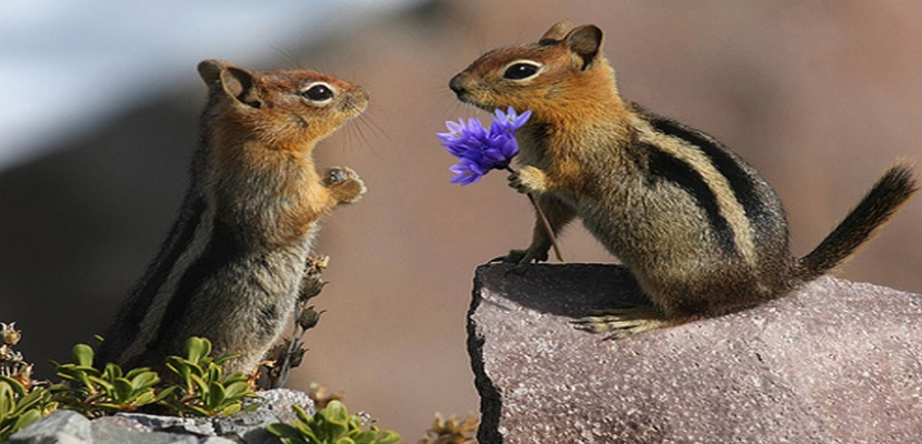 رومانسية الكائنات