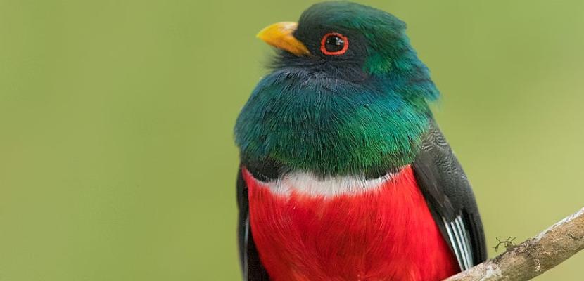 الطيور .. في اروع الوانها