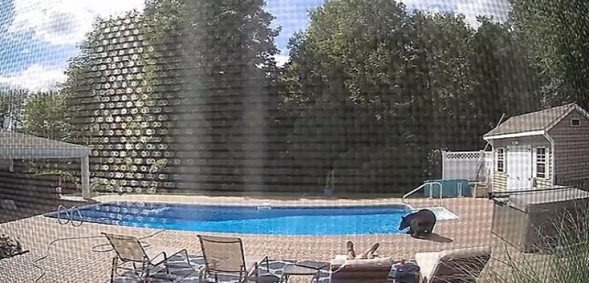 رجل يفاجأ بدب بعد استيقاظه من قيلولة على حمام السباحة بأمريكا
