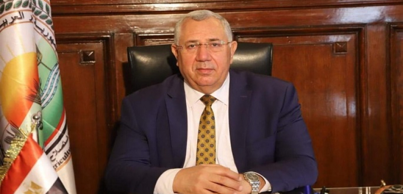 الزراعة: صادرات مصر من البطاطس تتجاوز ال 380 ألف طن هذا العام وروسيا أكبر مستورد