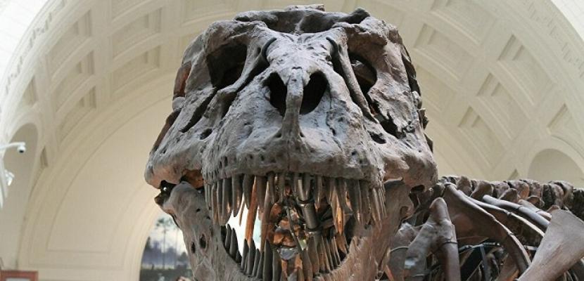 صبي عمره 12 عاما يعثر على هيكل ديناصور عاش قبل 69 مليون سنة