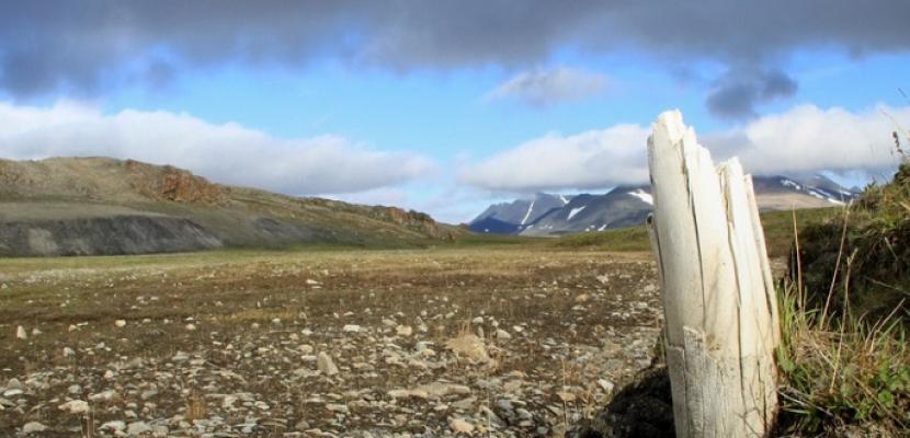 اكتشاف أقدم حمض نووي بالعالم في أسنان فيلة ماموث بسيبيريا