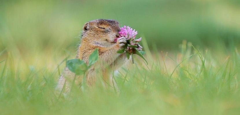 استنشاق عبير الورود .. للحيوانات نصيب ايضاً