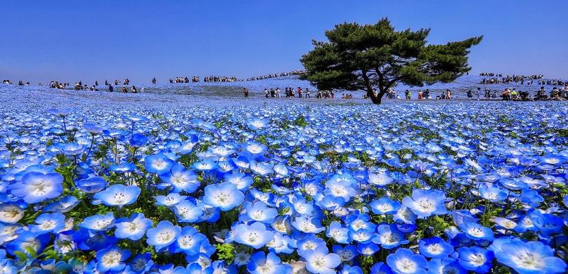 جمال الربيع في دول شرق آسيا