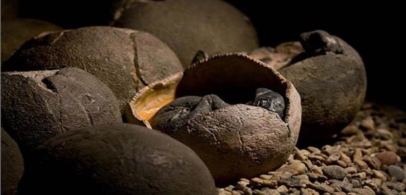 اكتشاف بيض ديناصور متحجر عمره 100 مليون سنة شرقي الصين