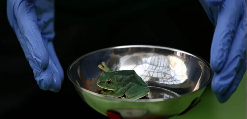 اكتشاف حيوان جديد في غابات الأمازون