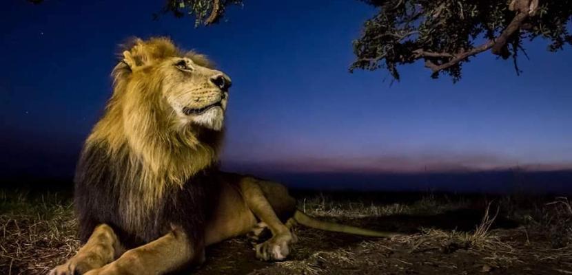 الحياة البرية في صور