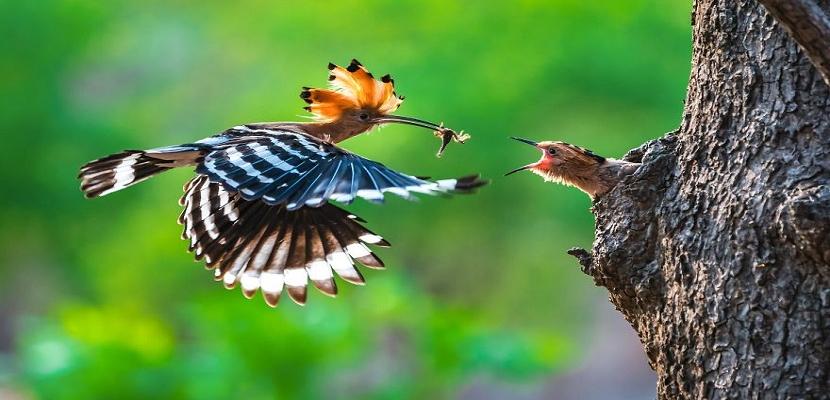 من أروع صور الطبيعة