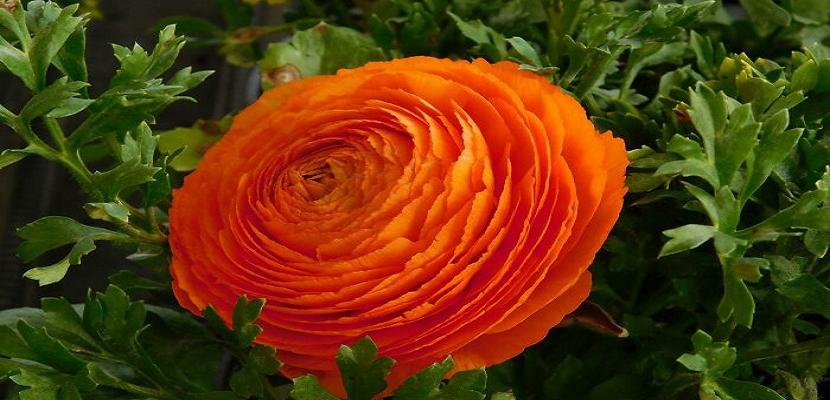الزهور .. في أجمل صورها