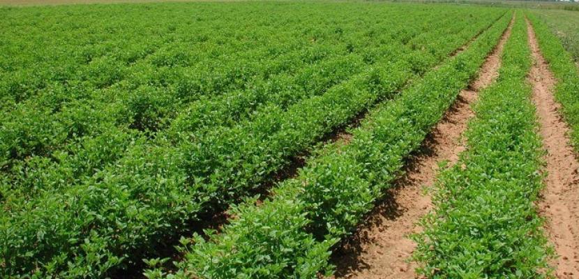 انجازات الرئيس السيسي في مجال الزراعة .. مشروعات قومية وارتفاع غير مسبوق في الصادرات