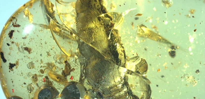 بالصور.. اكتشاف مذهل.. العثور على حلزون عمره 99 مليون سنة