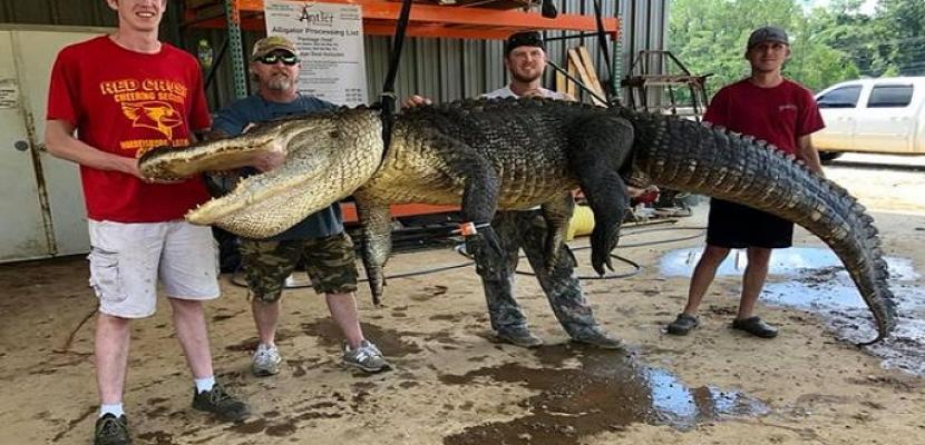 بالصور.. صياد أمريكي يعثر على معدات تعود إلى آلاف السنين داخل تمساح عملاق