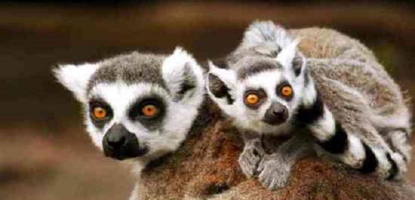 حديقة فيلادلفيا تبدأ تطعيم الحيوانات ضد فيروس كورونا