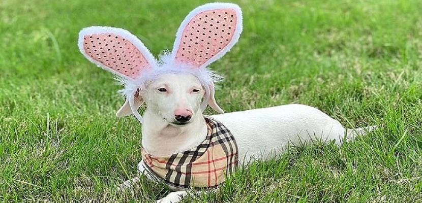 """الكلب """"ديوك"""" أعمى وأصم وتحول لـ نجمًا على السوشيال ميديا"""