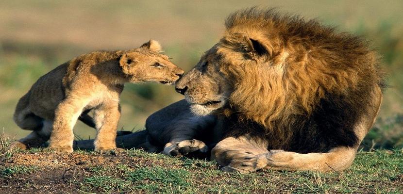 حيوانات افريقيا .. وسحر الغابات السمراء